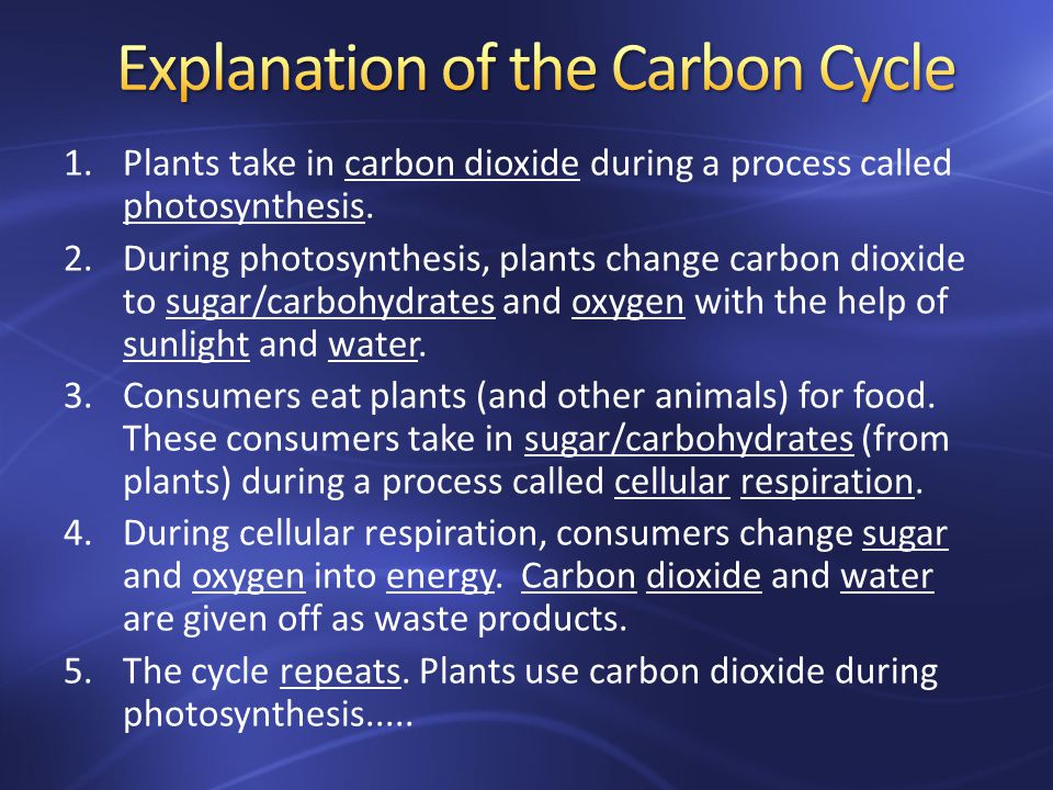 1.Plants take in carbon dioxide during a process called photosynthesis.