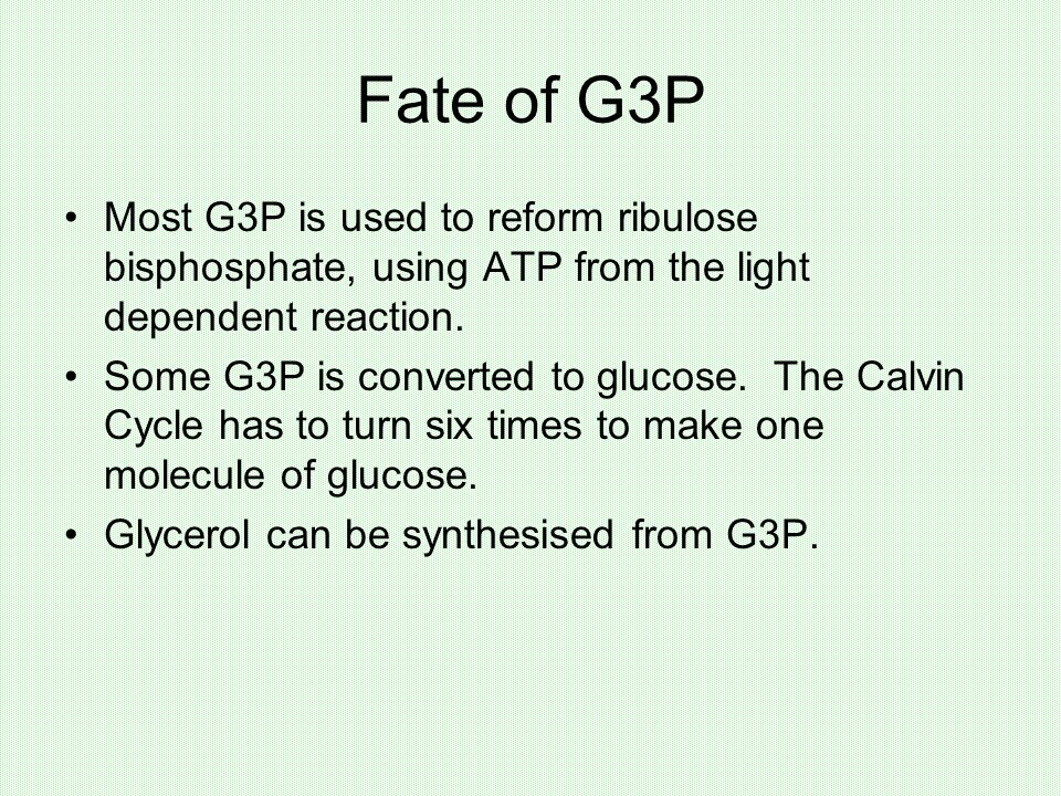Fate of G3P Most G3P is used to reform ribulose bisphosphate, using ATP from the light dependent reaction.