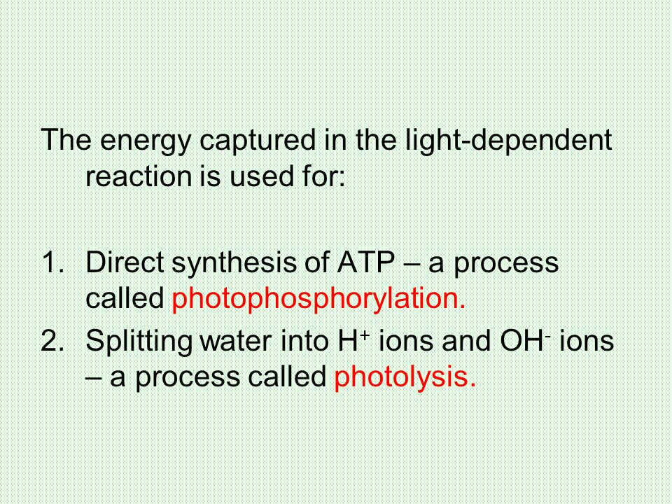 The energy captured in the light-dependent reaction is used for: 1.Direct synthesis of ATP – a process called photophosphorylation.