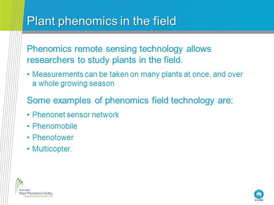 Plant phenomics in the field Phenomics remote sensing technology allows researchers to study plants in the field.