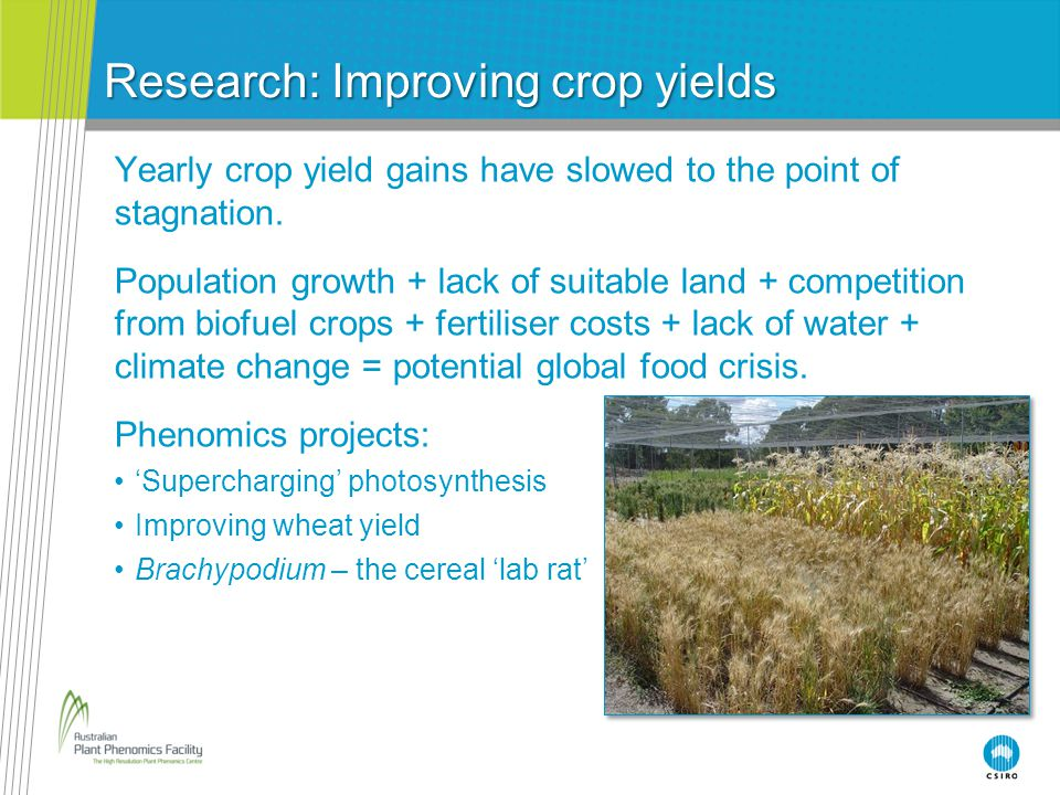 Research: Improving crop yields Yearly crop yield gains have slowed to the point of stagnation. Population growth + lack of suitable land + competitio