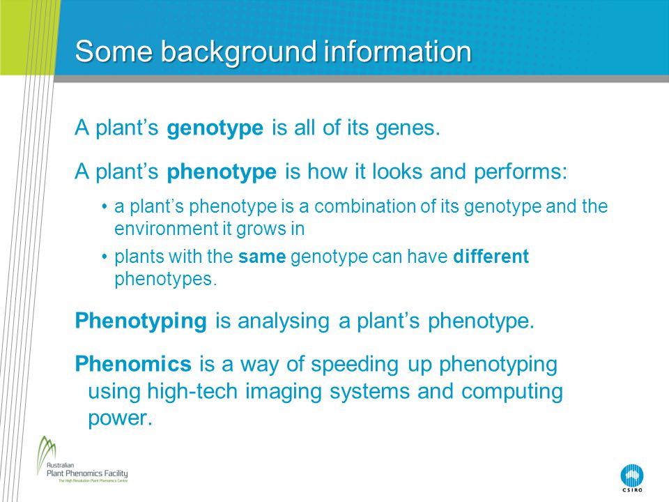 Some background information A plant's genotype is all of its genes. A plant's phenotype is how it looks and performs: a plant's phenotype is a combina