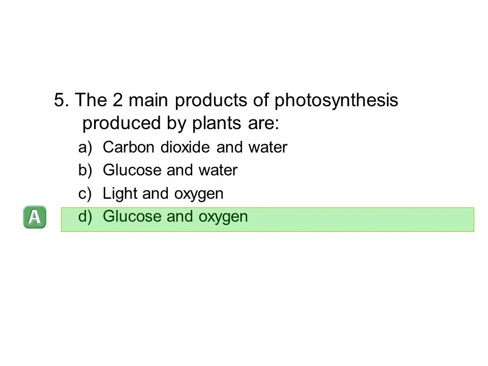 5. The 2 main products of photosynthesis produced by plants are: a)Carbon dioxide and water b)Glucose and water c)Light and oxygen d)Glucose and oxyge
