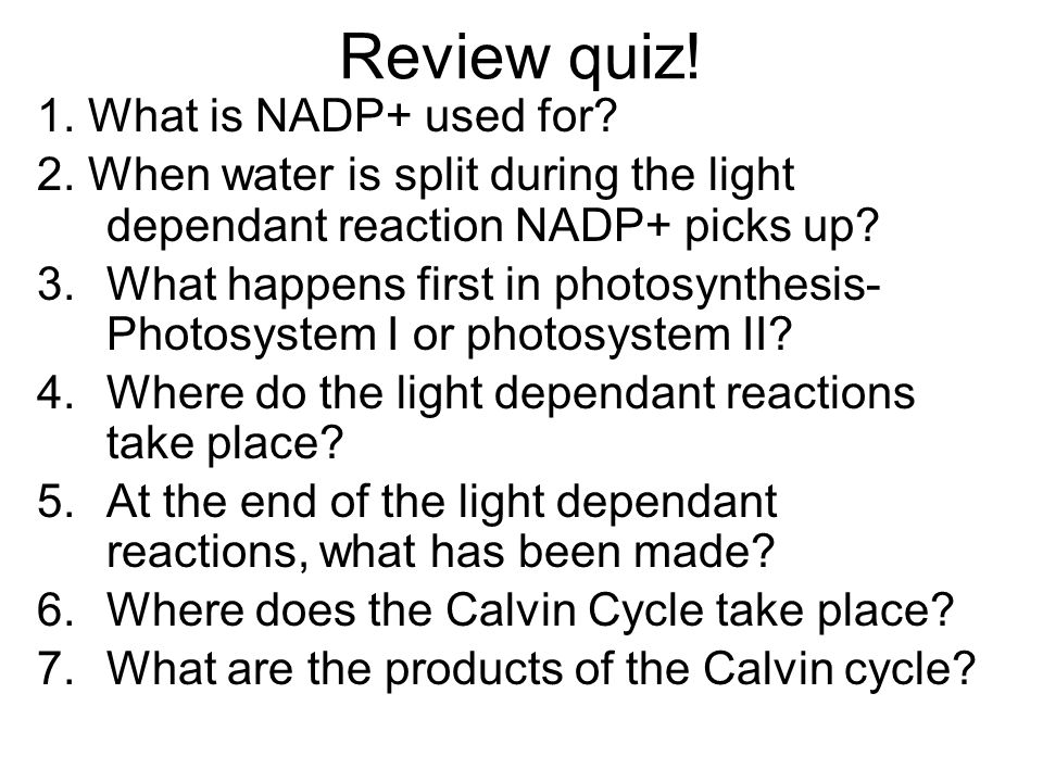 Review quiz! 1. What is NADP+ used for? 2. When water is split during the light dependant reaction NADP+ picks up? 3.What happens first in photosynthe