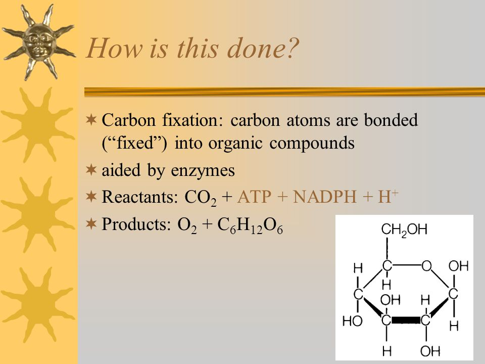 """How is this done?  Carbon fixation: carbon atoms are bonded (""""fixed"""") into organic compounds  aided by enzymes  Reactants: CO 2 + ATP + NADPH + H +"""