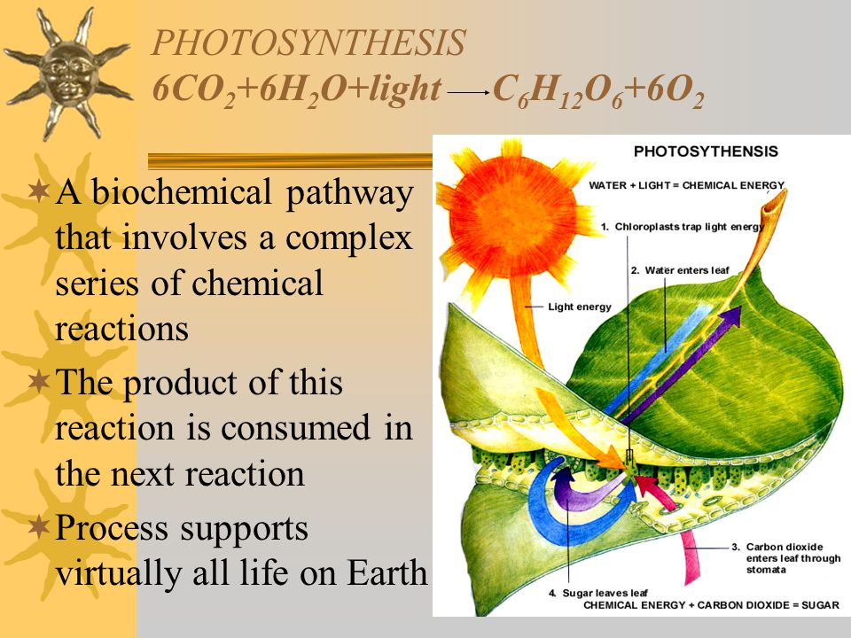 PHOTOSYNTHESIS 6CO 2 +6H 2 O+lightC 6 H 12 O 6 +6O 2  A biochemical pathway that involves a complex series of chemical reactions  The product of thi