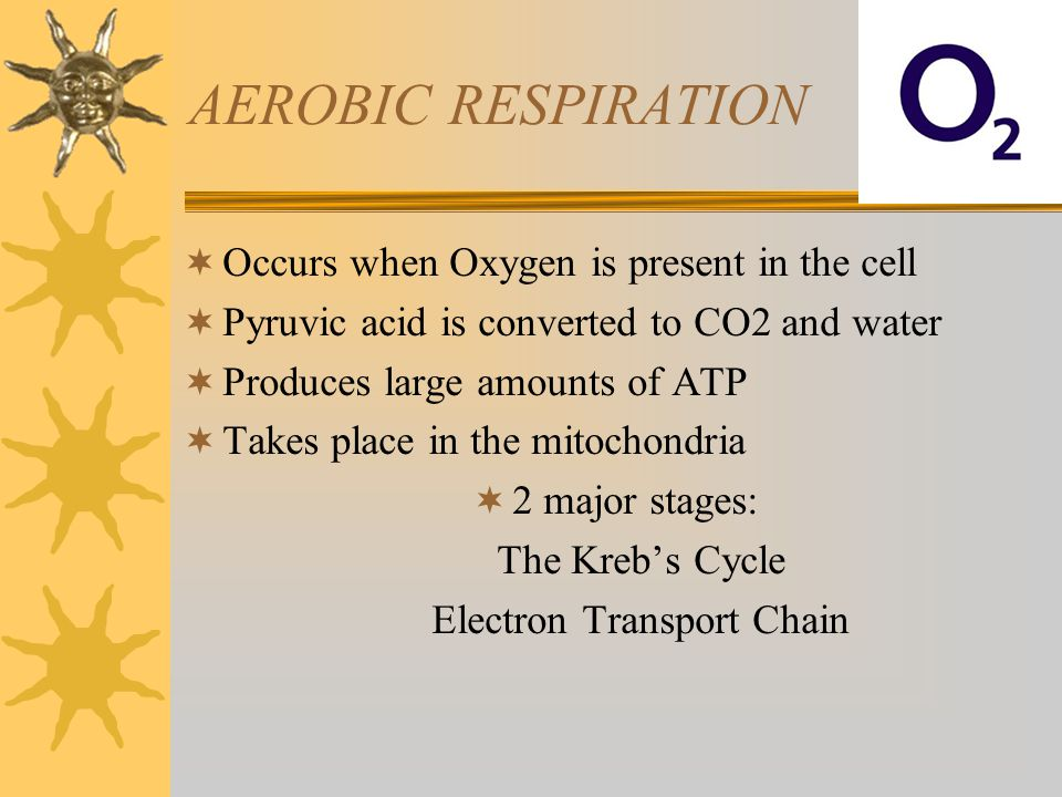 AEROBIC RESPIRATION  Occurs when Oxygen is present in the cell  Pyruvic acid is converted to CO2 and water  Produces large amounts of ATP  Takes p