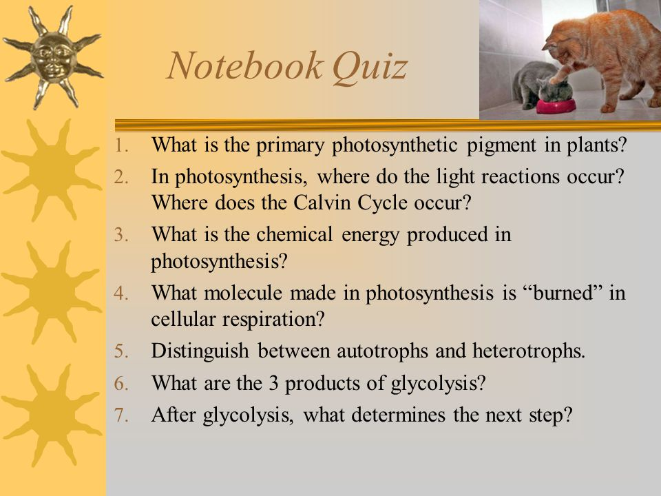 Notebook Quiz 1. What is the primary photosynthetic pigment in plants? 2. In photosynthesis, where do the light reactions occur? Where does the Calvin