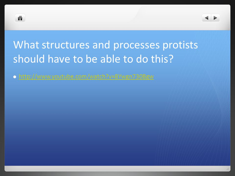 What structures and processes protists should have to be able to do this? http://www.youtube.com/watch?v=8Ywgn730Bgw