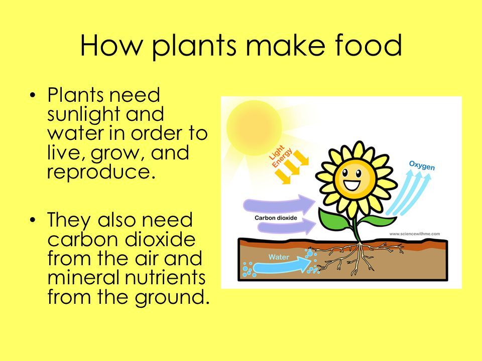 Lesson 3- How do plants reproduce.