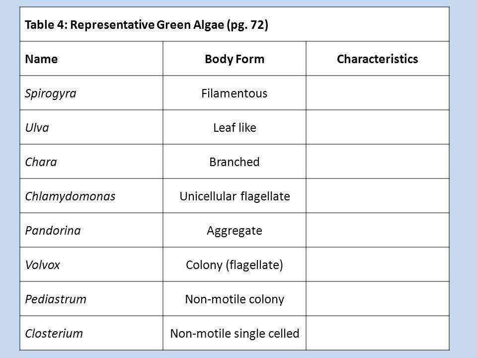 Table 4: Representative Green Algae (pg. 72) NameBody FormCharacteristics SpirogyraFilamentous UlvaLeaf like CharaBranched ChlamydomonasUnicellular fl