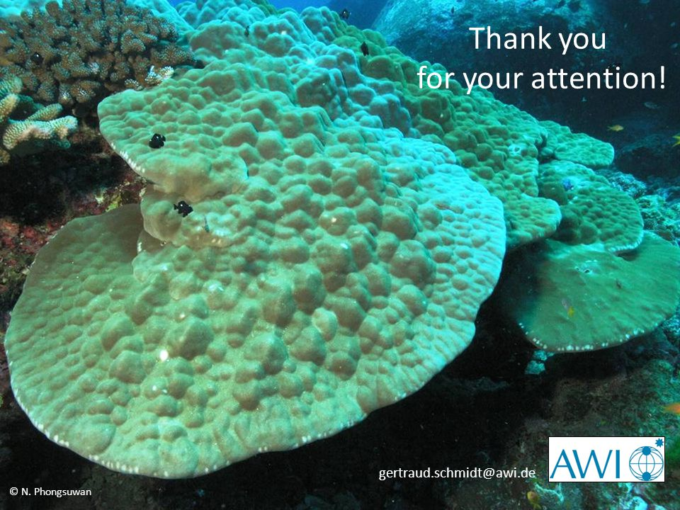 12th ICRS: Climate Change and Bleaching – Refuges for Corals in Time and Space © N. Phongsuwan Thank you for your attention! gertraud.schmidt@awi.de