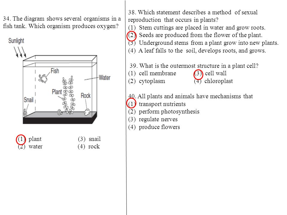 38.Which statement describes a method of sexual reproduction that occurs in plants.