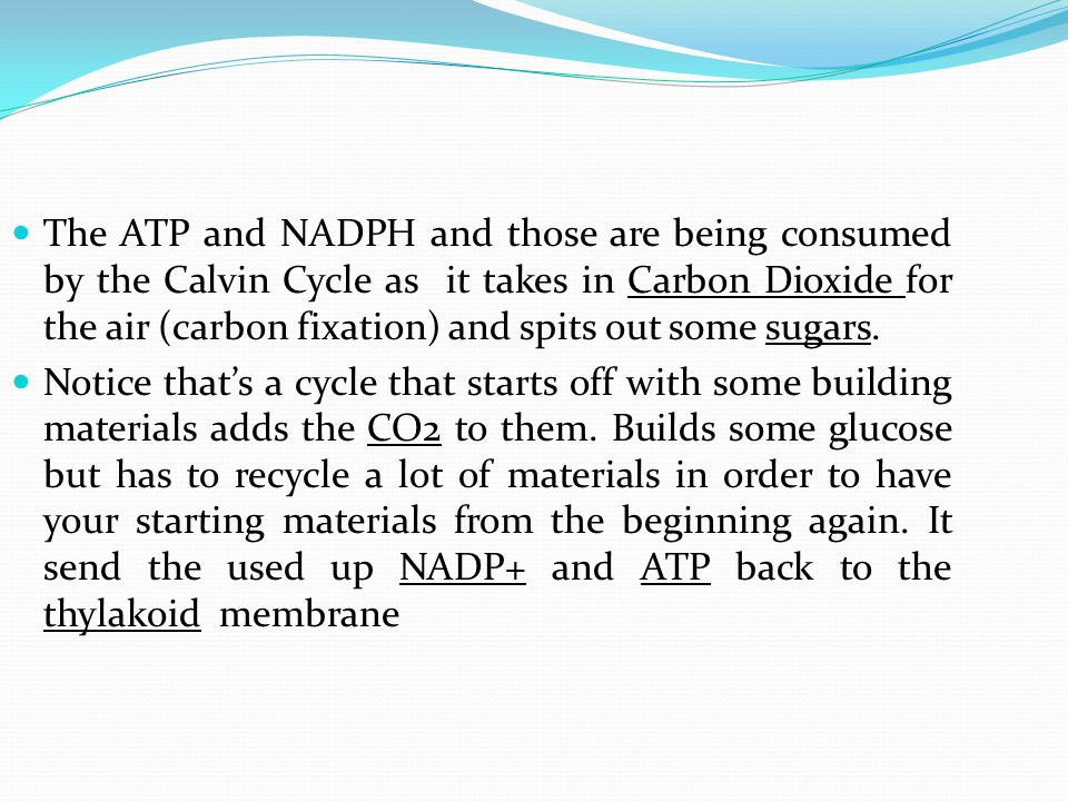 The ATP and NADPH and those are being consumed by the Calvin Cycle as it takes in Carbon Dioxide for the air (carbon fixation) and spits out some sugars.