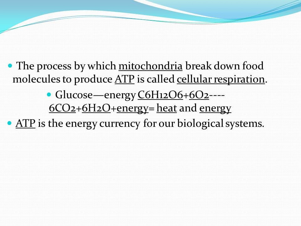 The process by which mitochondria break down food molecules to produce ATP is called cellular respiration. Glucose—energy C6H12O6+6O2---- 6CO2+6H2O+en