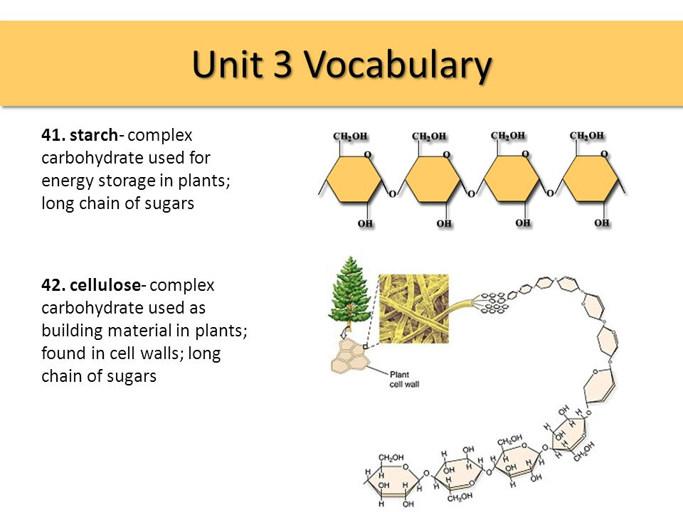 Unit 3 Vocabulary 41.