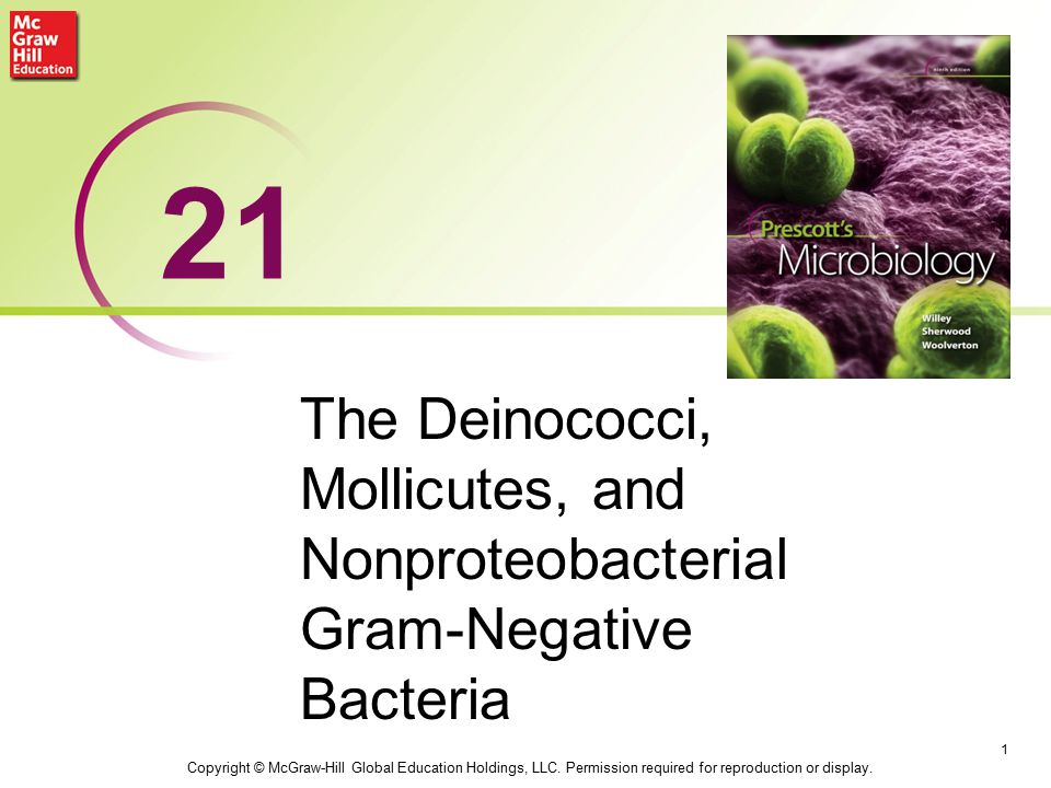 Deinococcus Extraordinarily resistant to desiccation and radiation –can survive 3–5 million rad (100 rad lethal to humans) Isolated from ground meat, feces, air, fresh water, and other sources, but natural habitat unknown 2