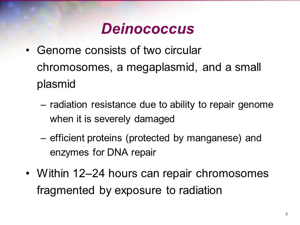 Deinococcus Genome consists of two circular chromosomes, a megaplasmid, and a small plasmid –radiation resistance due to ability to repair genome when