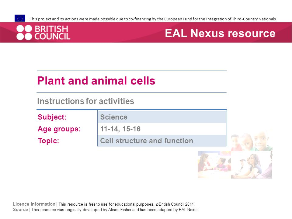 Plant and animal cells: card sort games  First match the six diagram cards to the pink vocabulary cards  Then match the green functions cards  Practise the language as you go.
