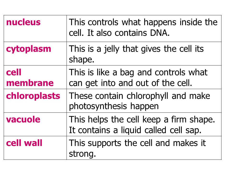 nucleusThis controls what happens inside the cell.