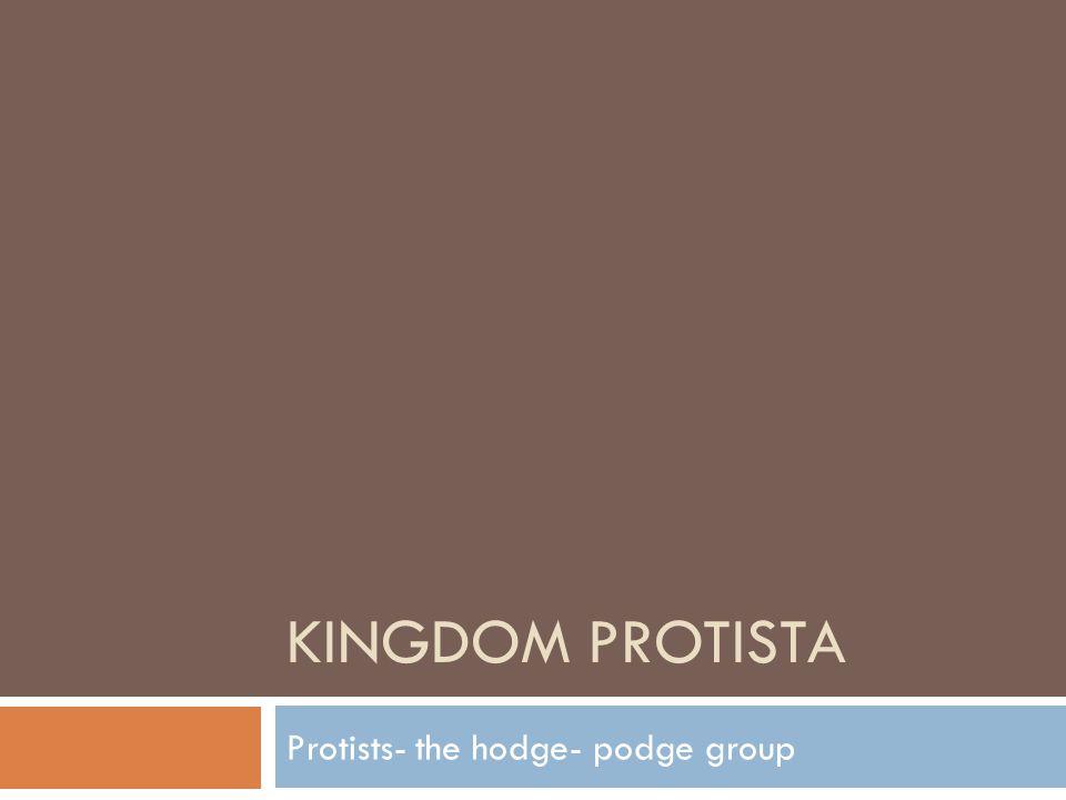 KINGDOM PROTISTA Protists- the hodge- podge group