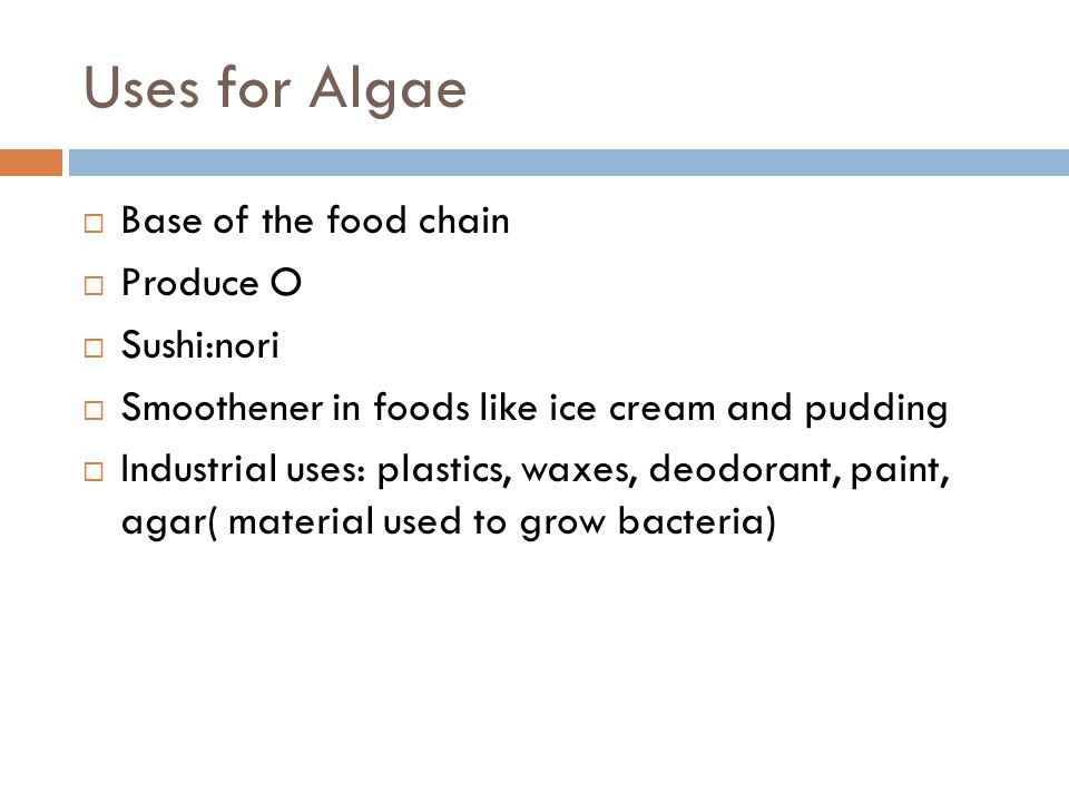 Uses for Algae  Base of the food chain  Produce O  Sushi:nori  Smoothener in foods like ice cream and pudding  Industrial uses: plastics, waxes,