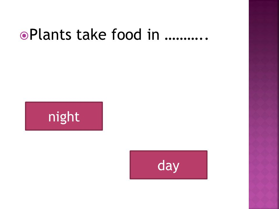 PPlants take food in ……….. day night