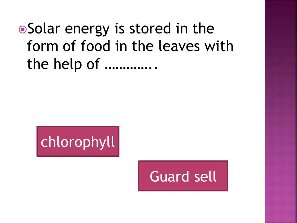 SSolar energy is stored in the form of food in the leaves with the help of …………..