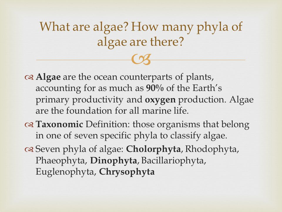   Algae are the ocean counterparts of plants, accounting for as much as 90% of the Earth's primary productivity and oxygen production.