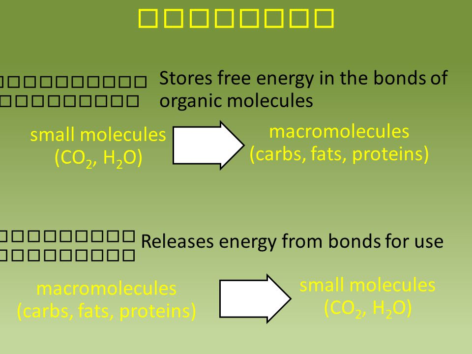 OVERVIEW ENDERGONIC REACTIONS Stores free energy in the bonds of organic molecules Releases energy from bonds for use small molecules (CO 2, H 2 O) ma