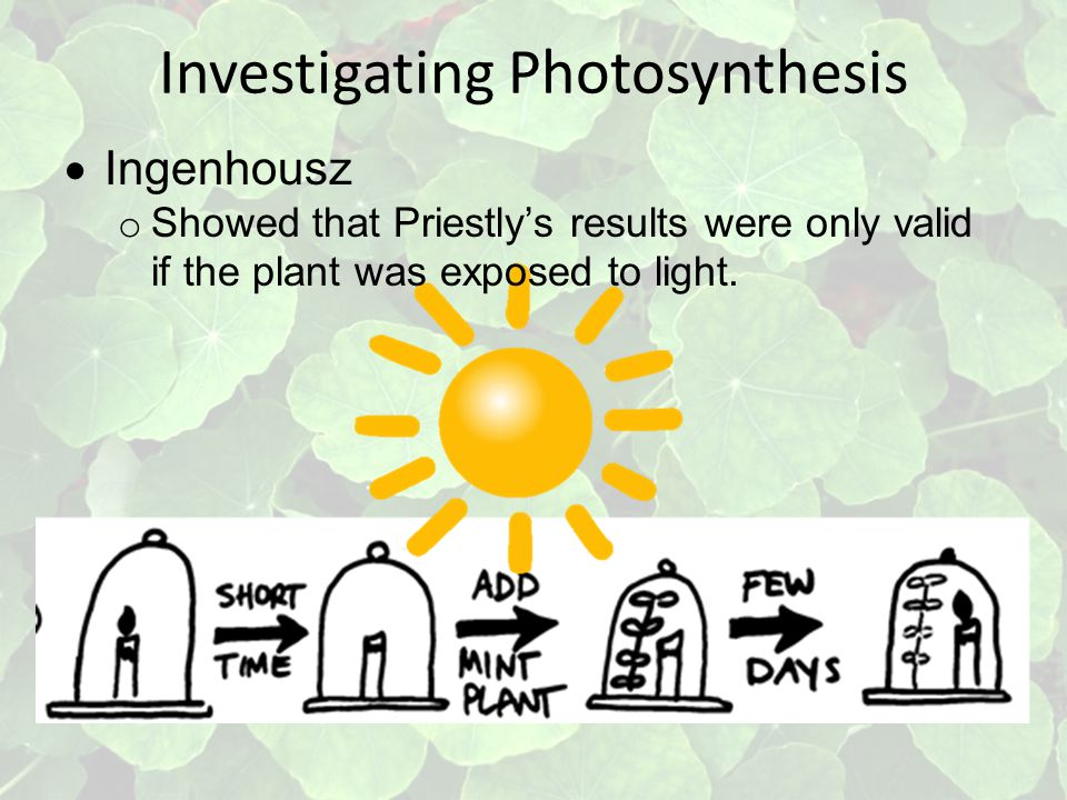Investigating Photosynthesis  Ingenhousz o Showed that Priestly's results were only valid if the plant was exposed to light.