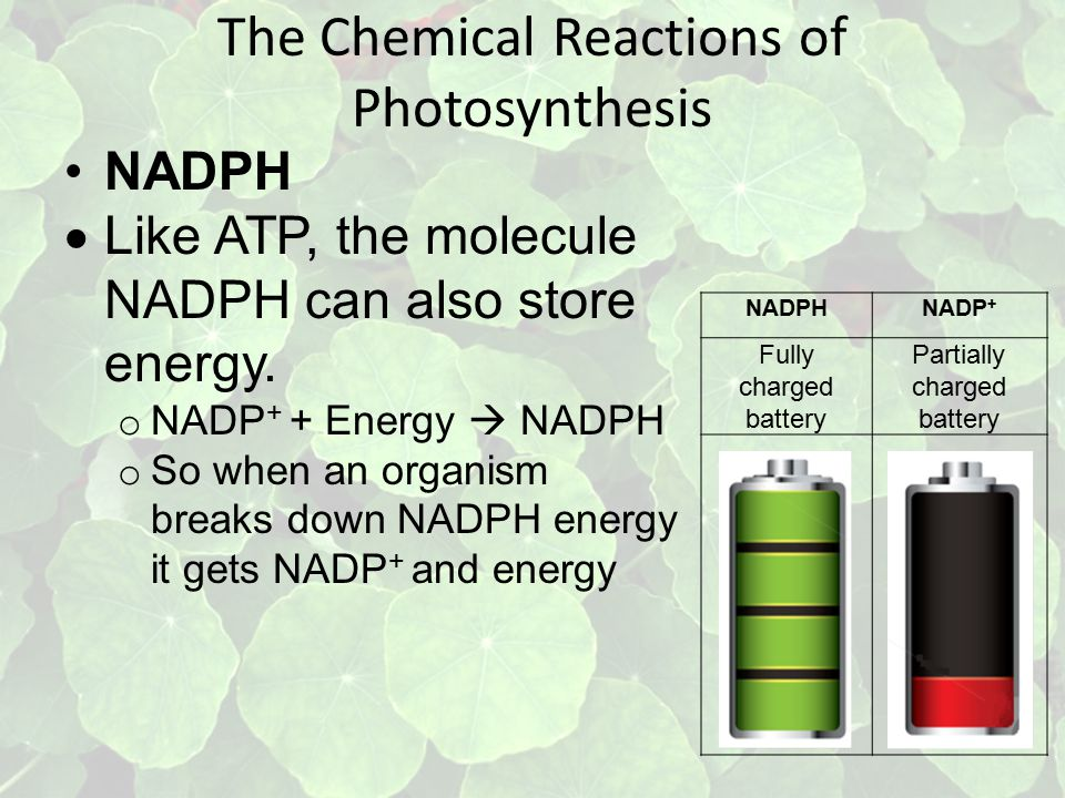 The Chemical Reactions of Photosynthesis NADPH  Like ATP, the molecule NADPH can also store energy.