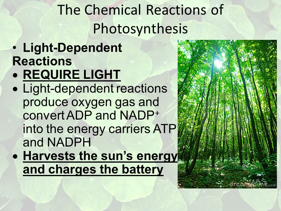 The Chemical Reactions of Photosynthesis Light-Dependent Reactions  REQUIRE LIGHT  Light-dependent reactions produce oxygen gas and convert ADP and NADP + into the energy carriers ATP and NADPH  Harvests the sun's energy and charges the battery