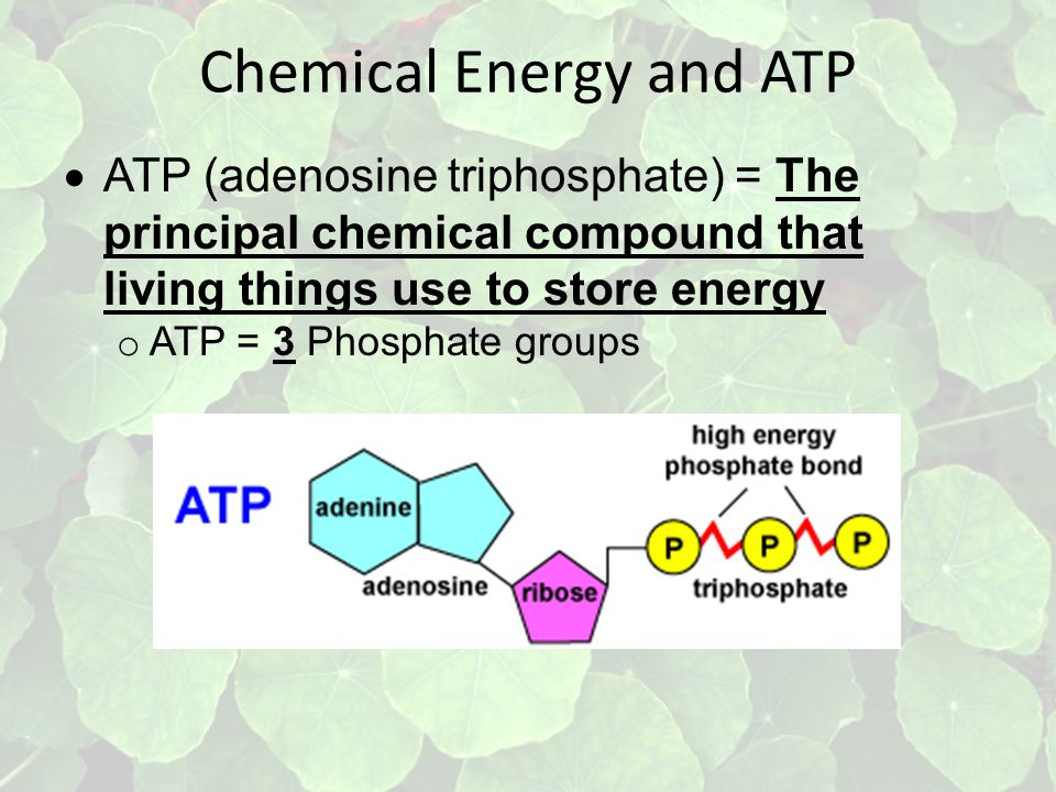 Chemical Energy and ATP  ATP (adenosine triphosphate) = The principal chemical compound that living things use to store energy o ATP = 3 Phosphate groups