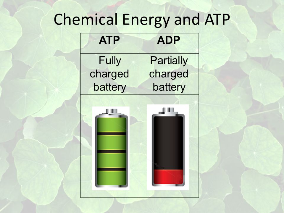 Chemical Energy and ATP ATPADP Fully charged battery Partially charged battery