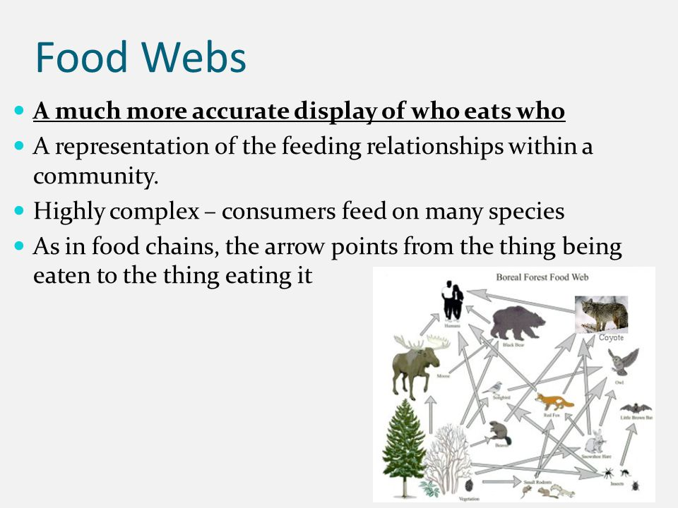 Food Webs A much more accurate display of who eats who A representation of the feeding relationships within a community.
