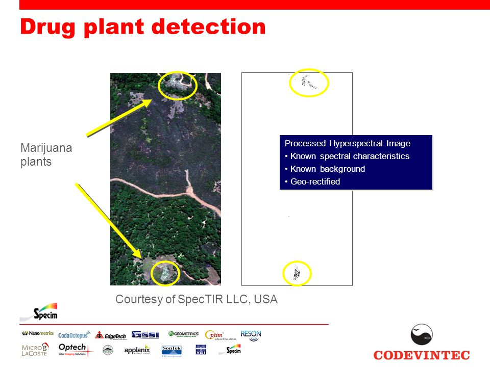 Drug plant detection Processed Hyperspectral Image Known spectral characteristics Known background Geo-rectified Processed Hyperspectral Image Known s