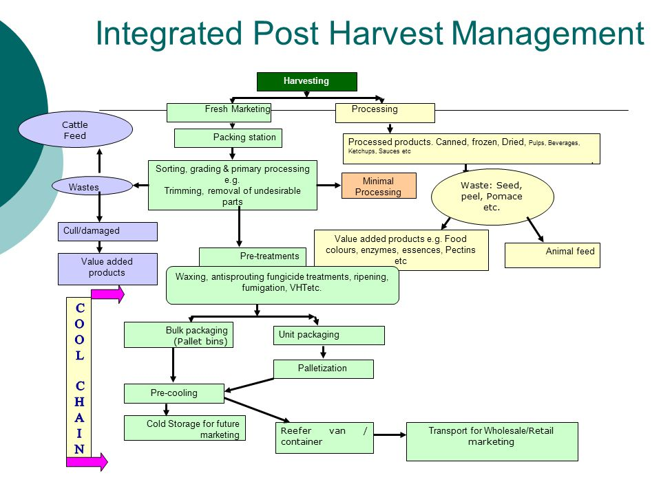 Integrated Post Harvest Management Harvesting Fresh MarketingProcessing Packing station Processed products. Canned, frozen, Dried, Pulps, Beverages, K