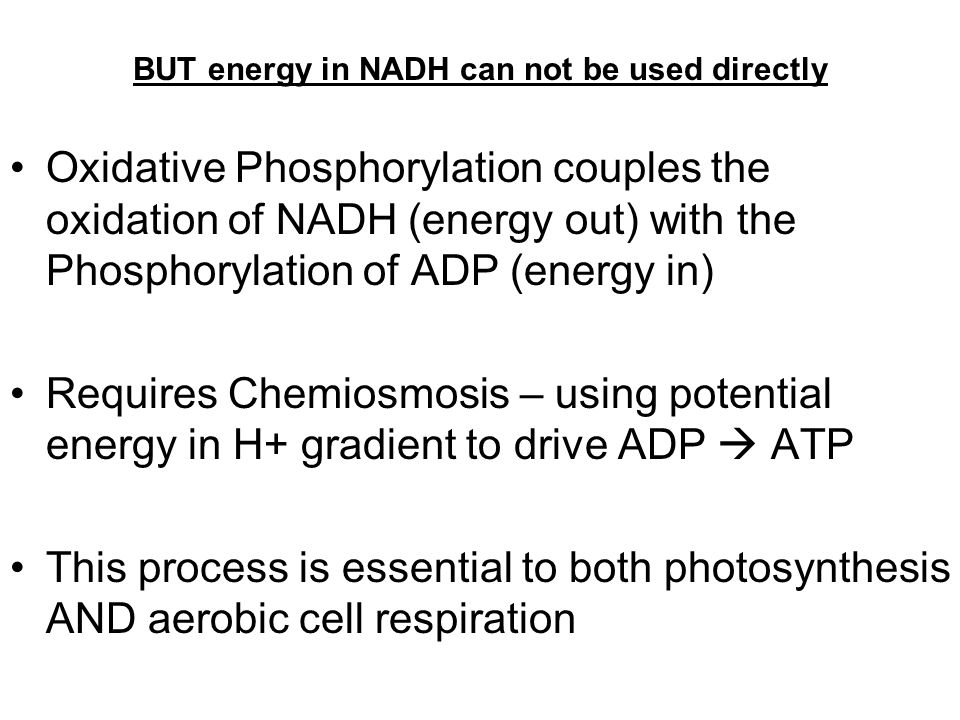 BUT energy in NADH can not be used directly Oxidative Phosphorylation couples the oxidation of NADH (energy out) with the Phosphorylation of ADP (energy in) Requires Chemiosmosis – using potential energy in H+ gradient to drive ADP  ATP This process is essential to both photosynthesis AND aerobic cell respiration