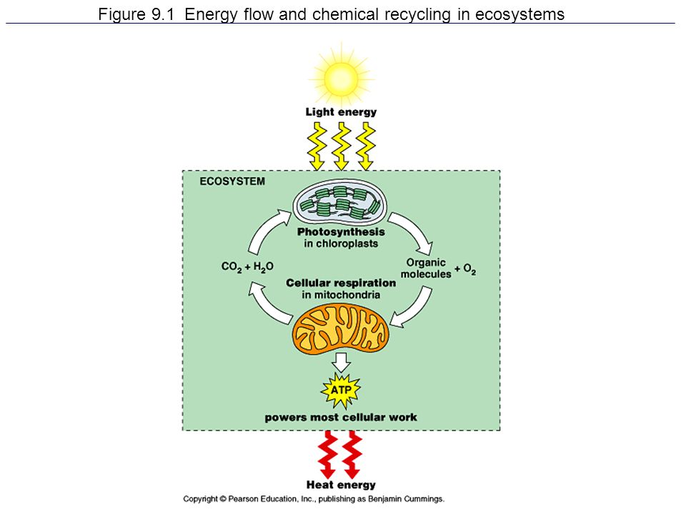 Figure 9.1 Energy flow and chemical recycling in ecosystems