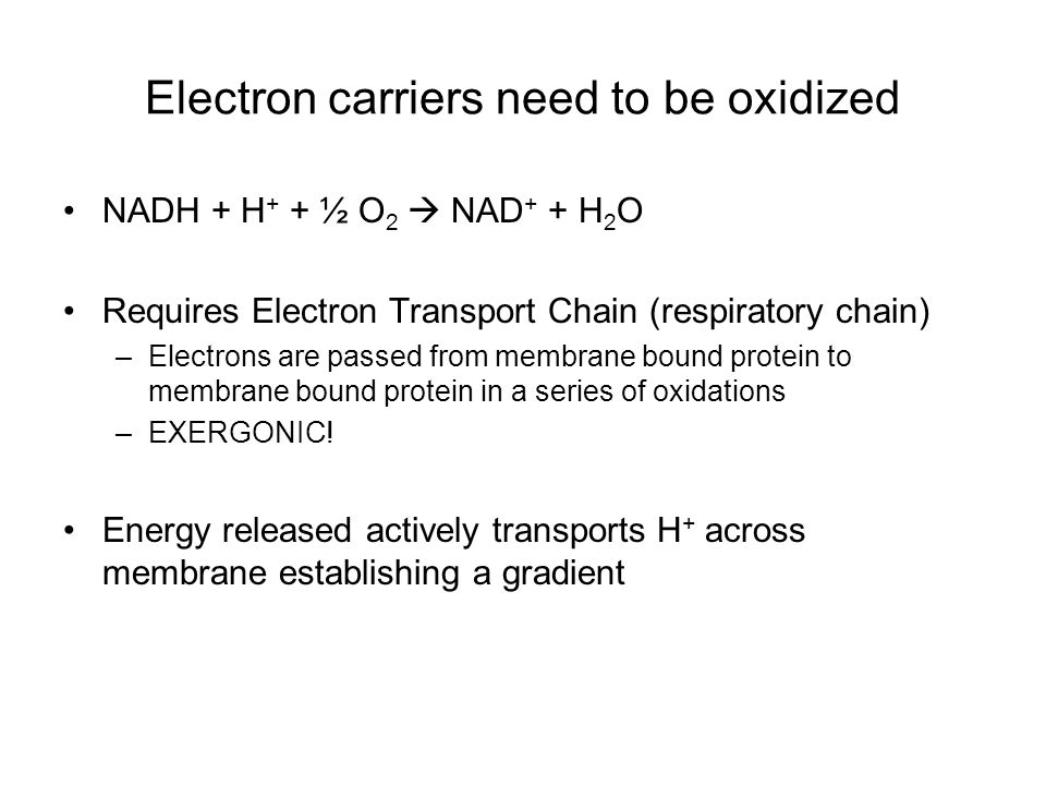 Electron carriers need to be oxidized NADH + H + + ½ O 2  NAD + + H 2 O Requires Electron Transport Chain (respiratory chain) –Electrons are passed from membrane bound protein to membrane bound protein in a series of oxidations –EXERGONIC.