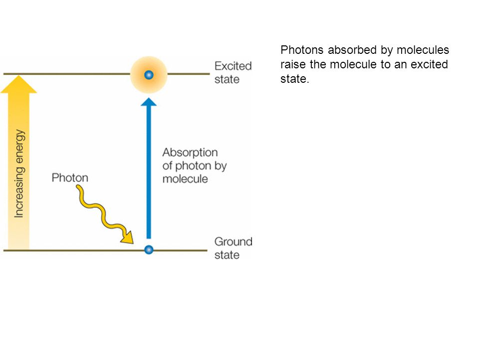 Photons absorbed by molecules raise the molecule to an excited state.