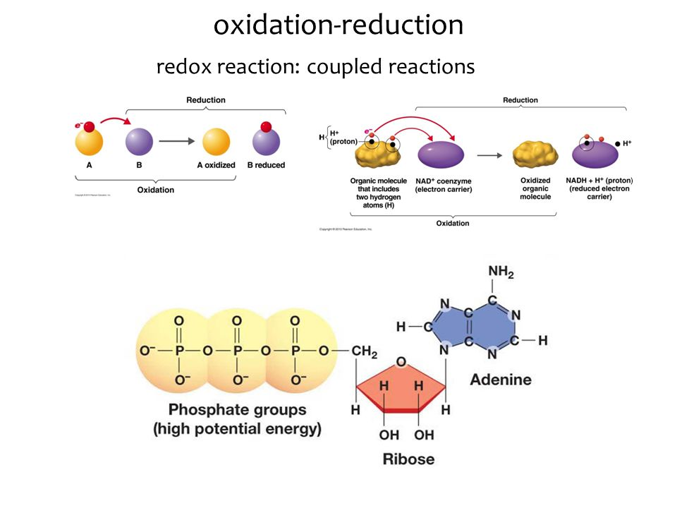 Chapter Five Learning Objectives 1.Discuss redox reactions in biological systems.