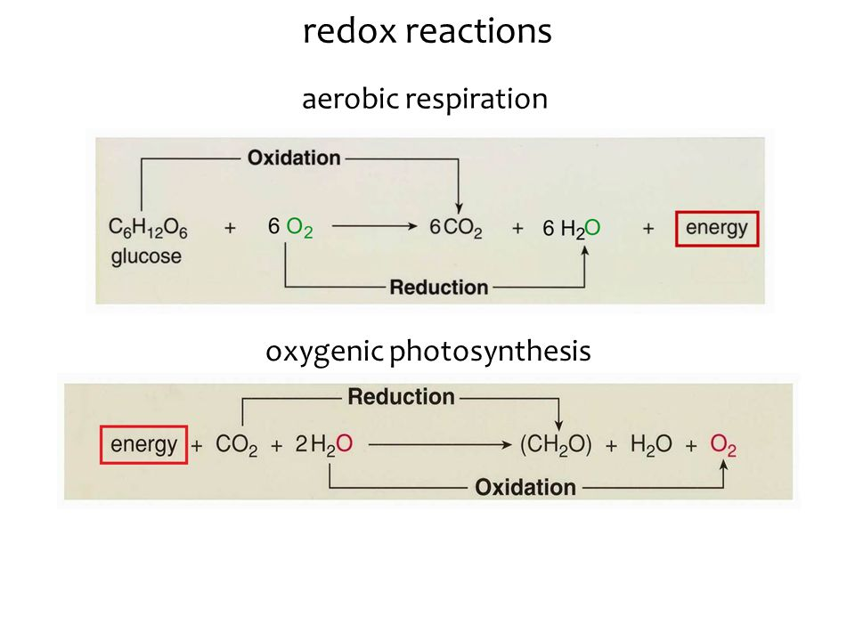 chemo-: conversion of chemical E  ATP iron oxidation sulfur oxidation -synthesis: carbon fixation (CO 2  organic molecule) autotrophy: chemosynthesis 2 H + ADP + P ETC ATP NAD + NADH carbon fixation H2SH2S SO 4 2- 2 H + ADP + P ETC ATP NAD + NADH carbon fixation 2Fe 3+ 2Fe 2+ heterotrophy