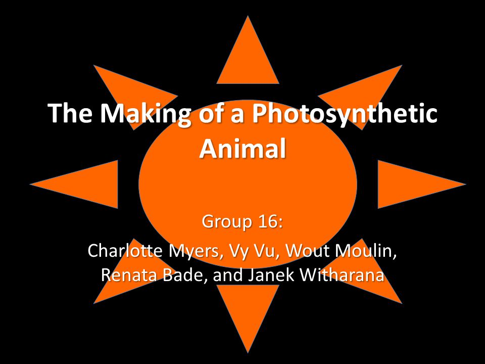 The Making of a Photosynthetic Animal Group 16: Charlotte Myers, Vy Vu, Wout Moulin, Renata Bade, and Janek Witharana