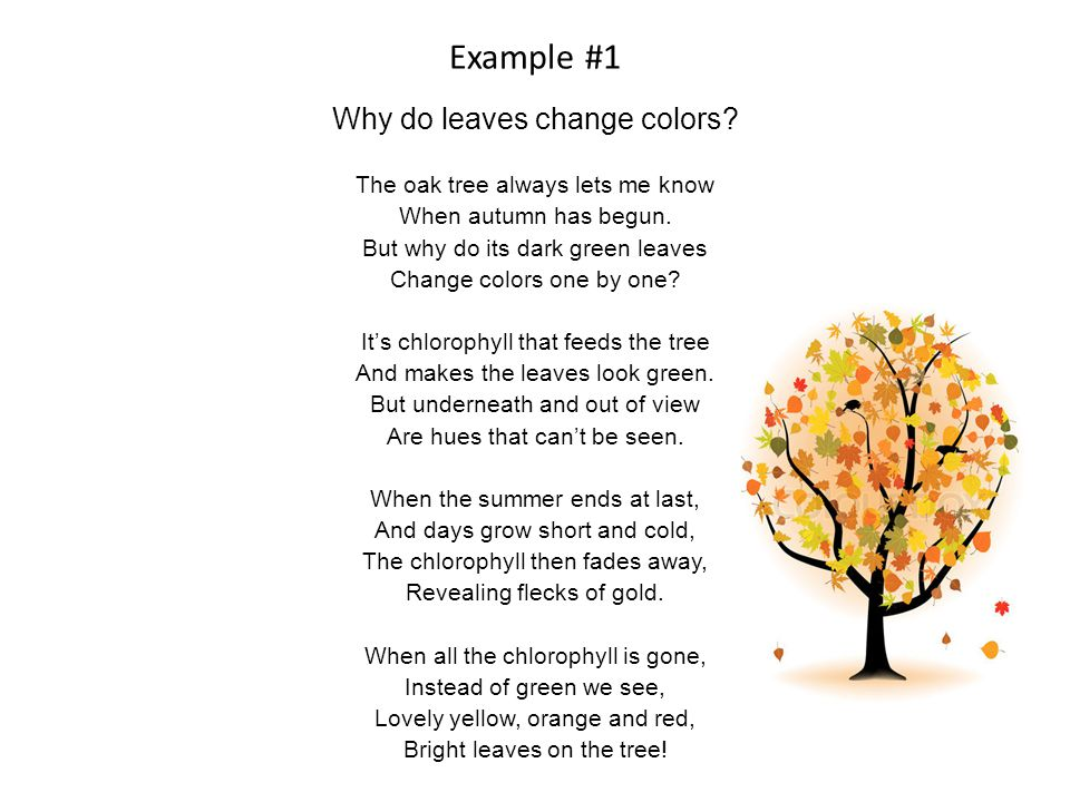 Example #1 Why do leaves change colors. The oak tree always lets me know When autumn has begun.