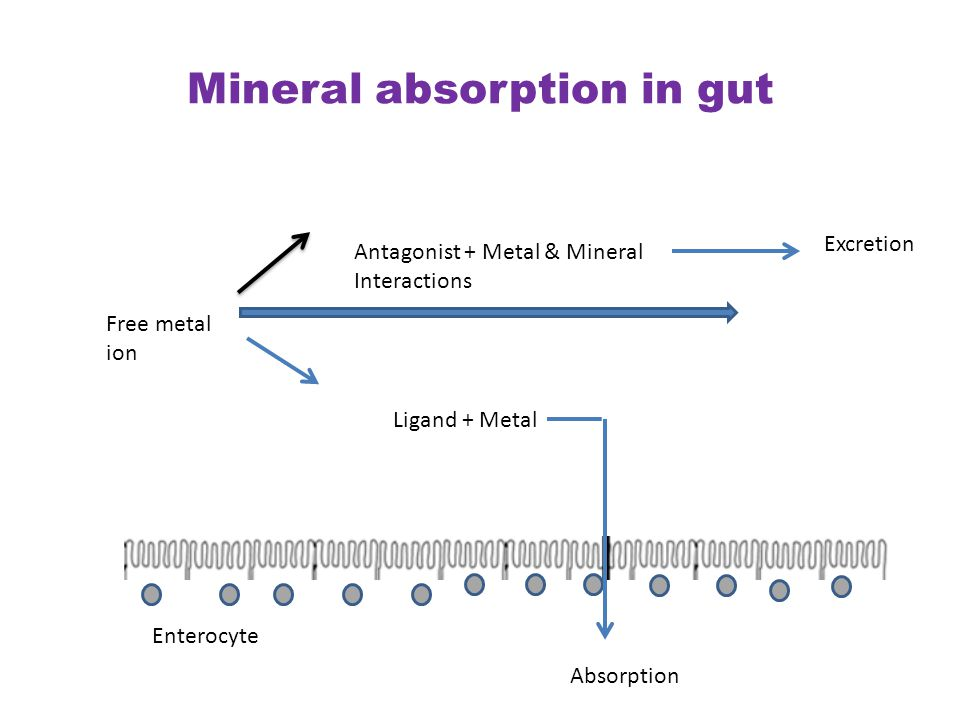 Mineral absorption in gut Free metal ion Antagonist + Metal & Mineral Interactions Excretion Ligand + Metal Absorption Enterocyte