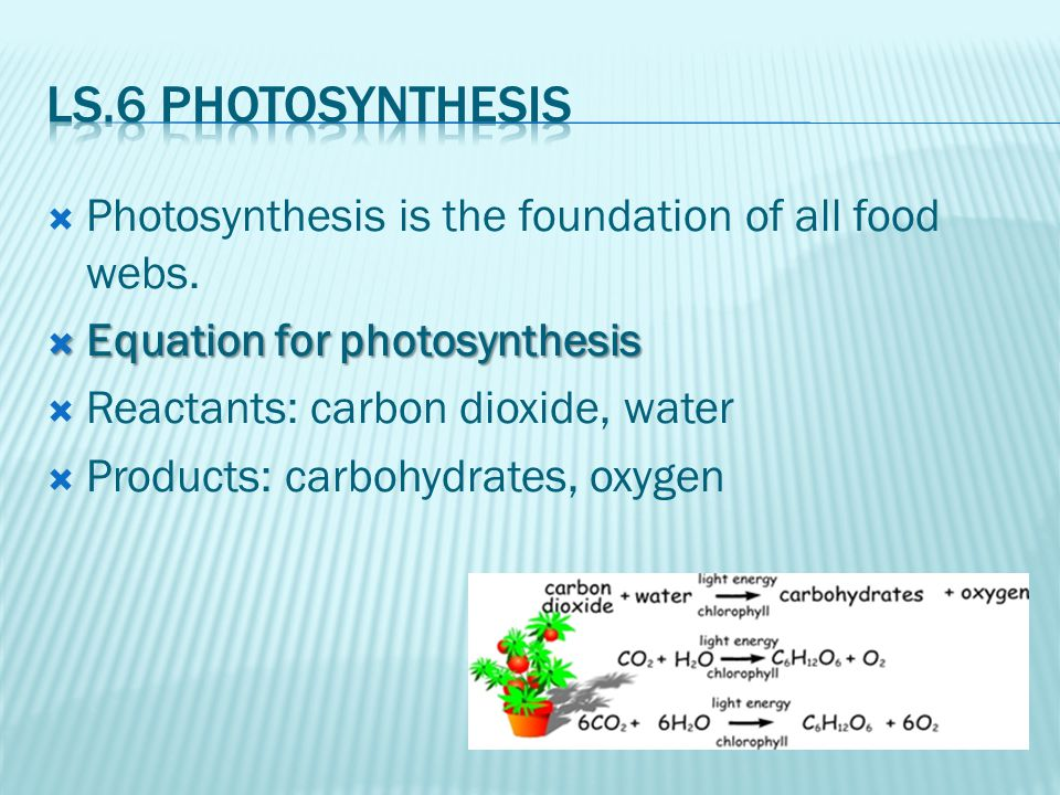  Photosynthesis is the foundation of all food webs.