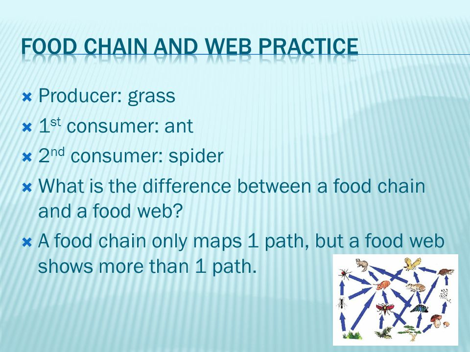  Producer: grass  1 st consumer: ant  2 nd consumer: spider  What is the difference between a food chain and a food web.