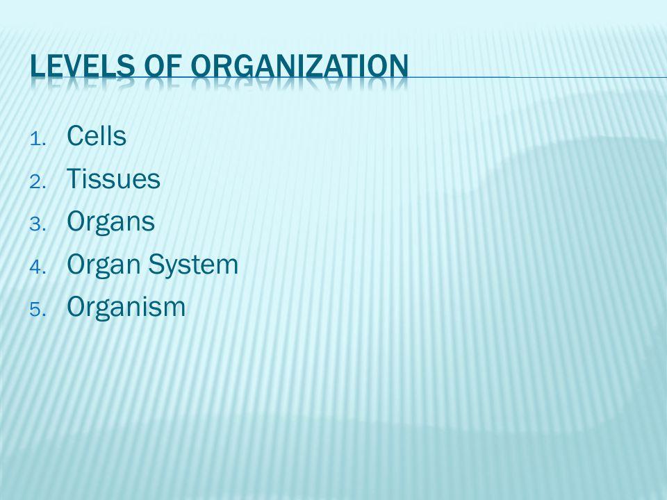 1. Cells 2. Tissues 3. Organs 4. Organ System 5. Organism